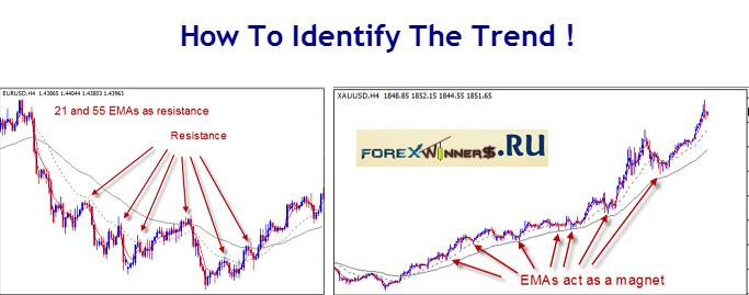 How to determine the trend in forex trading